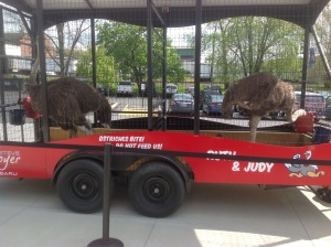 They even have ostrich at First Energy Stadium.